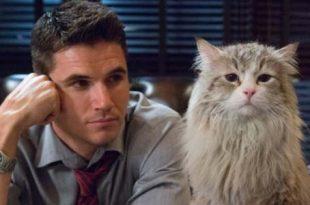 Una vita da gatto trama recensione