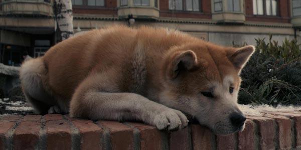 Hachiko Il tuo migliore amico film stasera in tv 19 gennaio: