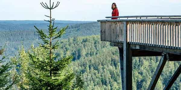 I delitti della foresta nera film stasera in tv 14 agosto: cast, trama, streaming